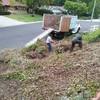 Sanchez tree services and clean ups